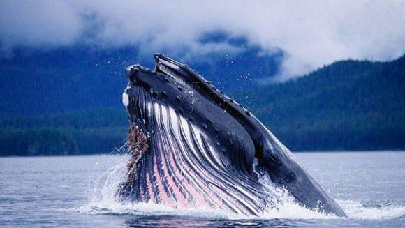 20160413_whale